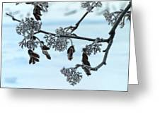 Rowan In Winter Greeting Card