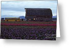 Rows Of Multi Colored Tulips In Field With Old Barn And Yellow B Greeting Card