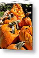 Rows Of Pumpkins Greeting Card Greeting Card