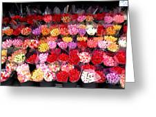 Rows Of Roses Greeting Card