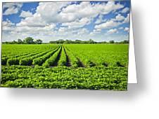 Rows Of Soy Plants In Field Greeting Card by Elena Elisseeva