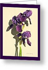 Royal Purple Iris Still Life Greeting Card