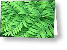 Royal Fern  Frond Detail Greeting Card