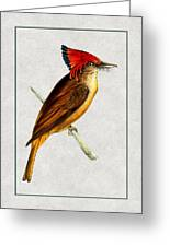 Royal Flycatcher Vertical Greeting Card