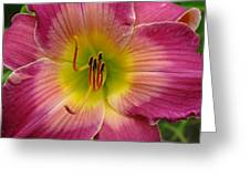 Royal Heritage Daylily Face Greeting Card