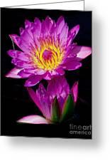 Royal Lily Greeting Card