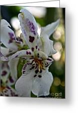Royal Orchid  Greeting Card