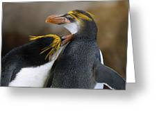 Royal Penguin Couple Courting Greeting Card