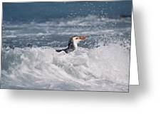 Royal Penguin Swimming In Surf Greeting Card