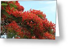 Royal Poinciana Branch Greeting Card