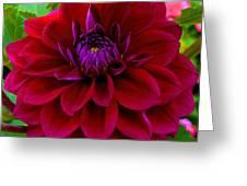 Royal Purple Greeting Card