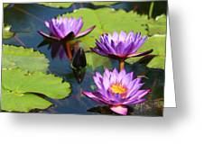 Royal Purple Water Lilies Greeting Card