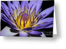 Royal Purple Water Lily #5 Greeting Card