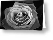 Rozica  Greeting Card