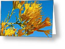 Rubber Rabbitbrush Off Hole-in-the-rock Road In Grand Staircase Escalante National Monument-utah Greeting Card