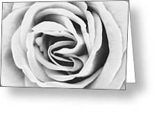 Rubellite Rose Bw Palm Springs Greeting Card