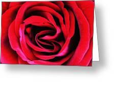 Rubellite Rose Palm Springs Greeting Card