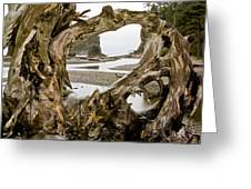 Ruby Beach Driftwood #3 Greeting Card
