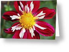 Ruby Glow Greeting Card