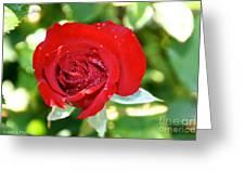 Ruby Rose Diamond Dust Greeting Card