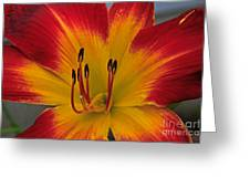 Ruby Spider  II Greeting Card