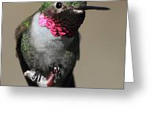 Ruby-throated Hummer Greeting Card