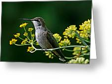 Ruby Throated Hummingbird 1 Greeting Card