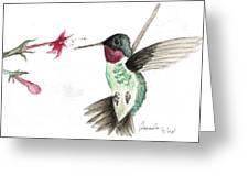 Ruby Throated Hummingbird Greeting Card by Brenda Ruark