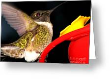 Ruby-throated Hummingbird Landing On Feeder Greeting Card