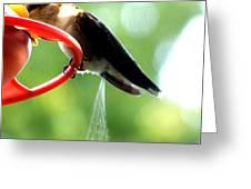 Ruby-throated Hummingbird Pooping Greeting Card