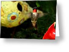Ruby- Throated Hummingbird Greeting Card