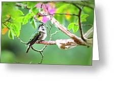 Ruby-throated Hummingbnird - 6763-002 Greeting Card