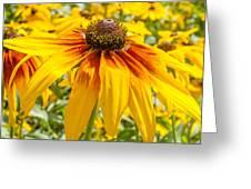 Rudbeckia Greeting Card