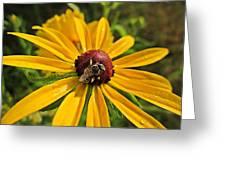 Rudbeckia Bee Greeting Card