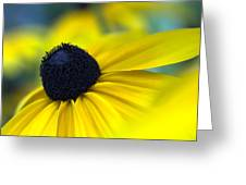 Rudbeckia Coneflower Greeting Card