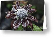 Rudbeckia First Frost Greeting Card