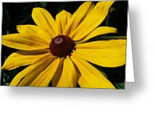 Rudbeckia Macro Greeting Card