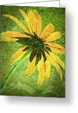 Rudbeckia On Cement Greeting Card