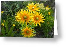 Rudbeckias With Green Centers Greeting Card