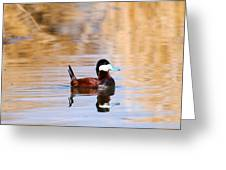 Ruddy Duck  Greeting Card