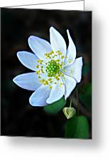 Rue Anemone Greeting Card