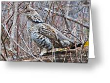 Ruffed Grouse Male Greeting Card by Chris Heitstuman