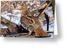 Ruffed Grouse On Alert Greeting Card