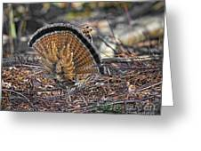 Ruffed Grouse Rear Strut Greeting Card