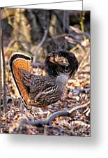 Ruffed Grouse Ruffed Up Greeting Card