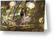 Ruffed Grouse Side Pose Greeting Card