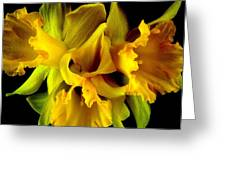 Ruffled Daffodils Greeting Card