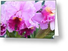 Ruffled Orchids Greeting Card