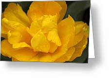 Yellow Ruffled Parrot Tulip Flower Greeting Card