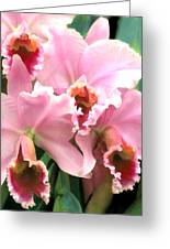 Ruffles And Flourishes Cattleya Orchids Greeting Card